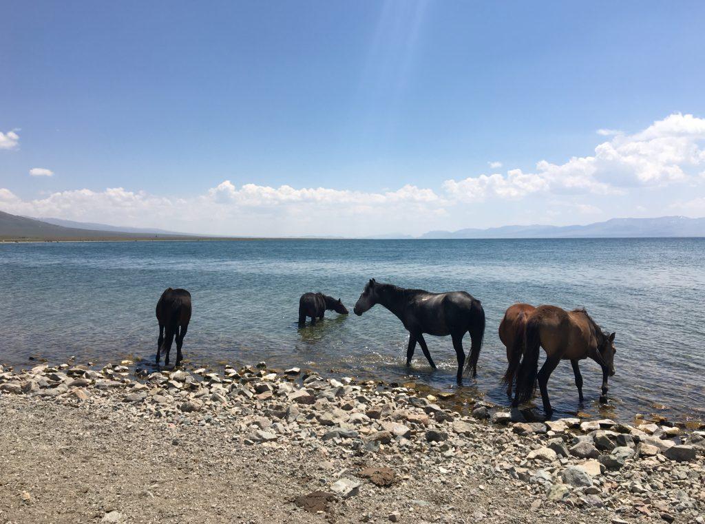 Horses at Song Kol