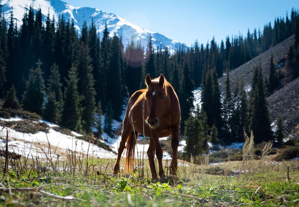 horse in a Kyrgyz valley